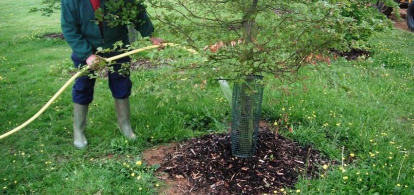 Подкормка деревьев и кустарников осенью