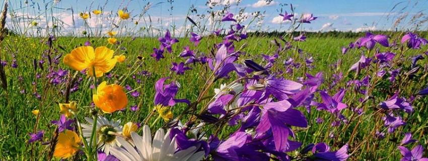 Луговые и садовые цветы и травы в мавританском газоне