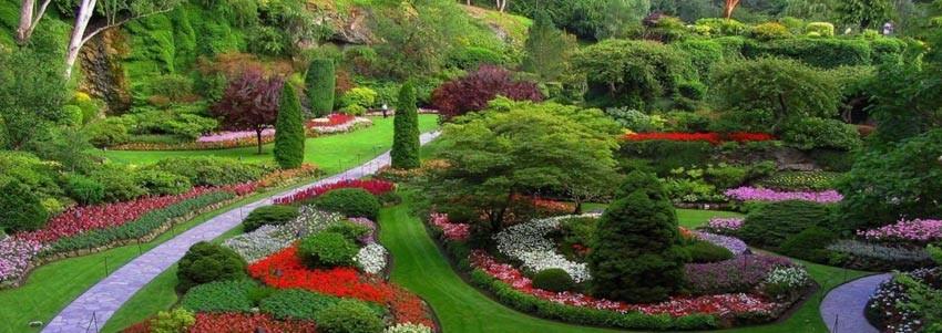 Вечнозеленые туи украсят любой ландшафт
